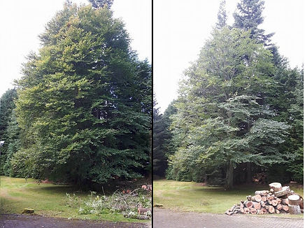 Reduction - before and after.jpg