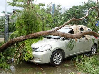 Εάν πέσει ένα δέντρο πάνω στο αυτοκίνητο αποζημιώνεται ο ιδιοκτήτης τη ζημιά;