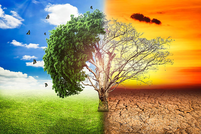 global-warming-climate-change-tree_1big_