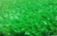 20mm grama esportida verde (002).jpg