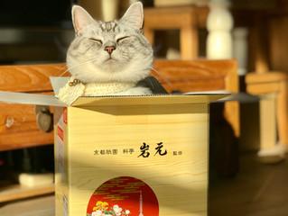 #4・不思議な猫猫寺