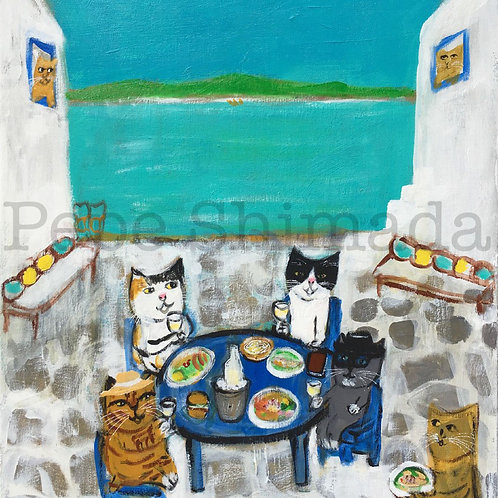 Cats of white islands afternoon