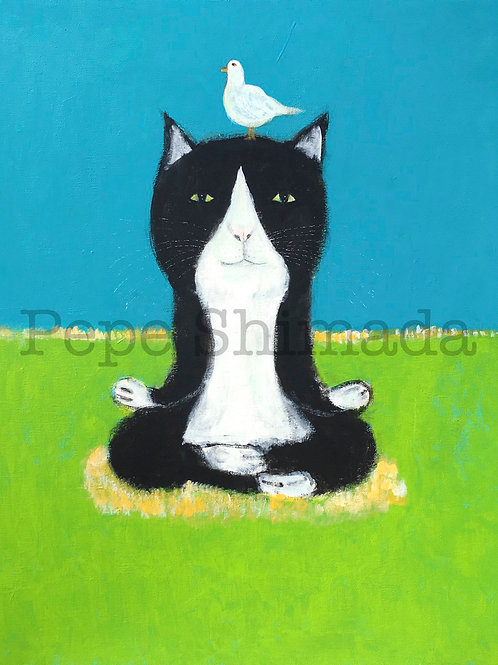 """Yoga cat and white pigeon"""