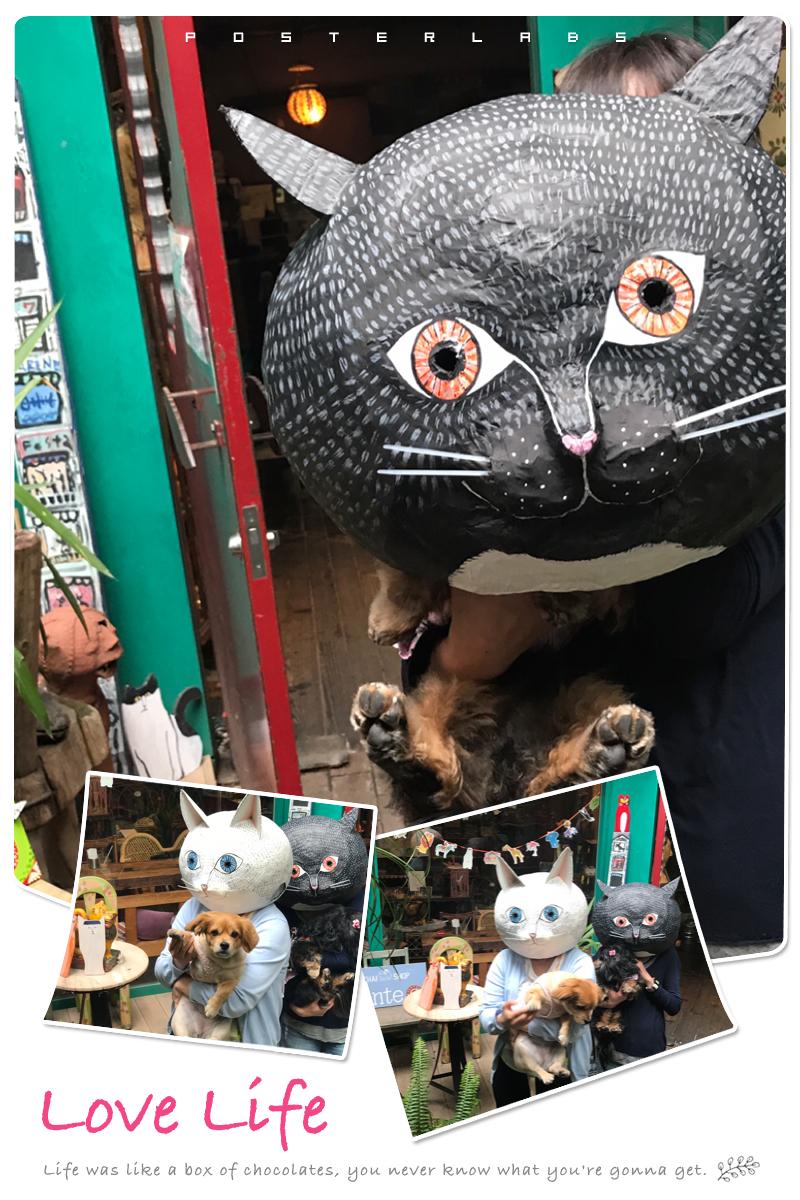 愛犬と猫る