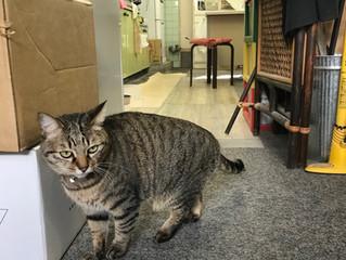 #7・酒蔵通りの猫事務所