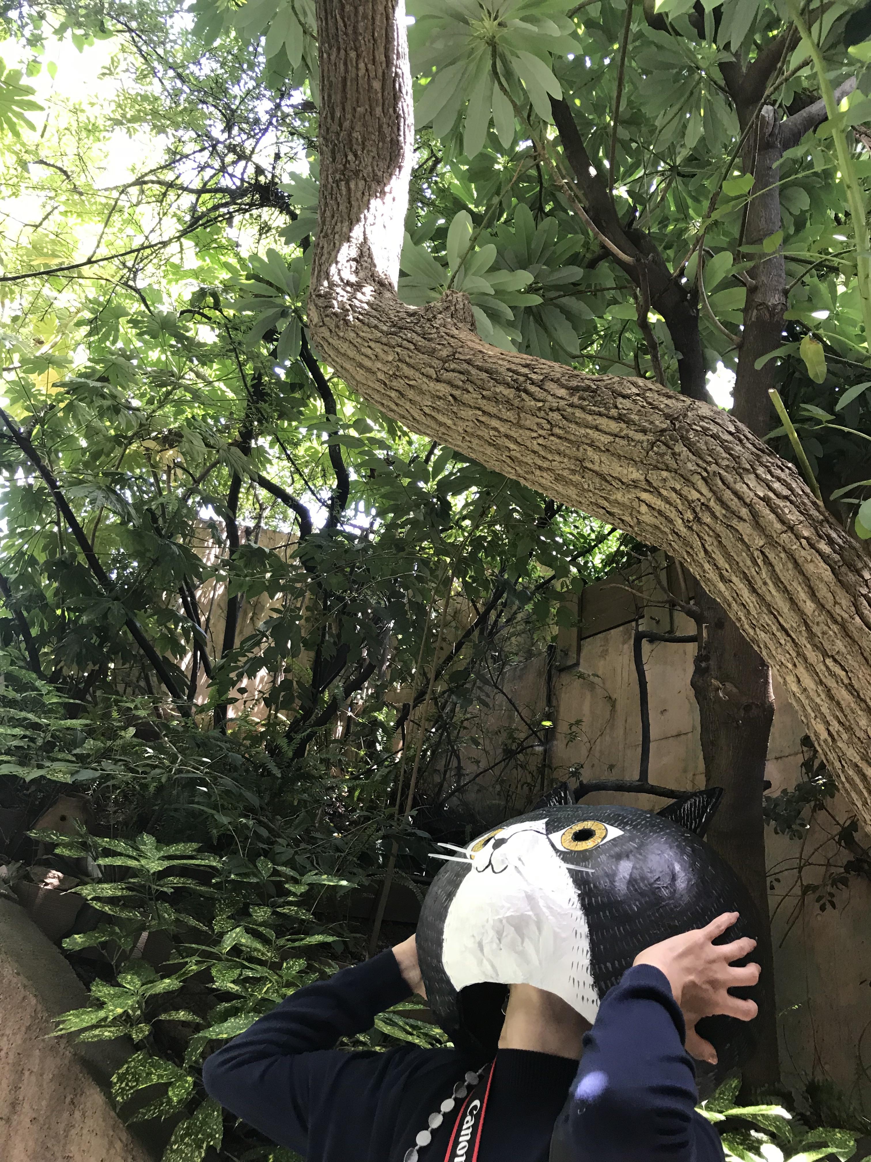 猫も見上げるカンテガーデン