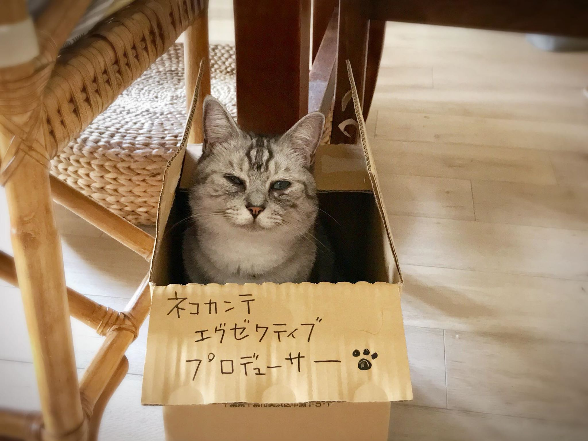 nekocante最高責任猫
