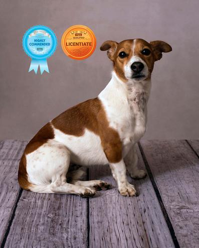 Award winning photo Ambience Images Lancashire dog photography