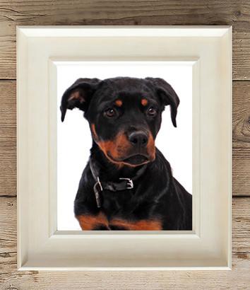 dog photo in frame dog photography Lancashire