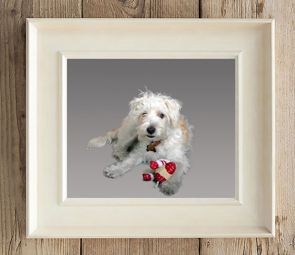 dog with toy on grey background Ambience Images lancashire
