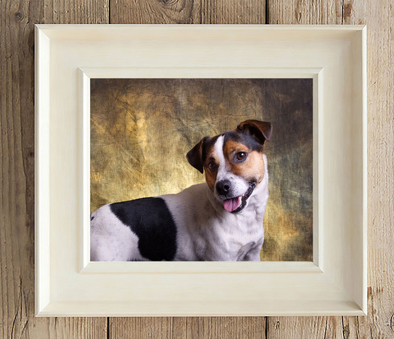 terrier on gold background