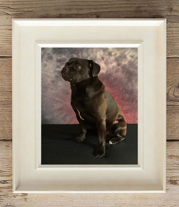 black dog in photo frame pet photography Lancs
