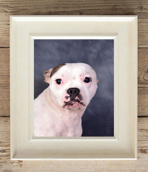 dog with blue background in white photo frame pet photo Lancashire