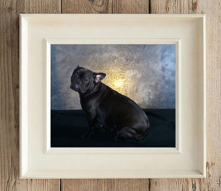 black dog in photo frame Bury Photographer Dave Pitts