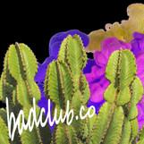 cactus 2019