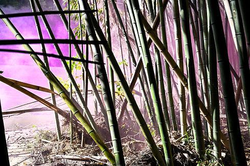bamboooforest-40.jpg