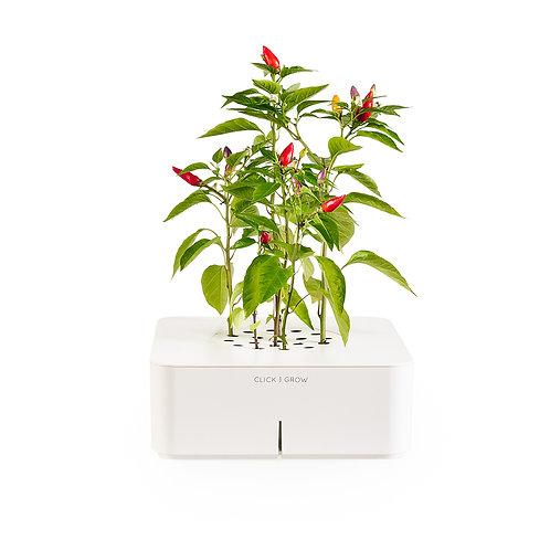 Smart Pot - Chilli Pepper