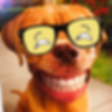 False-teeth-for-dogs-6.png