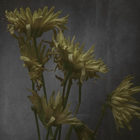 Flower-0279-yellow2.jpg