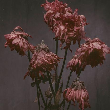 Flower-0257-pink1.2.jpg