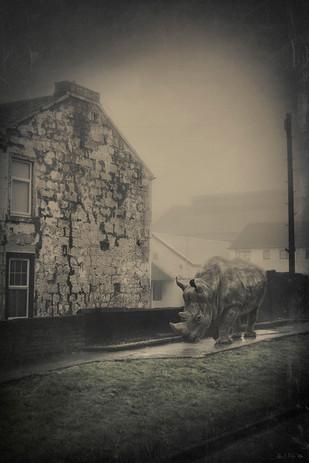 Glasgow-0080-Rhino-web.jpg