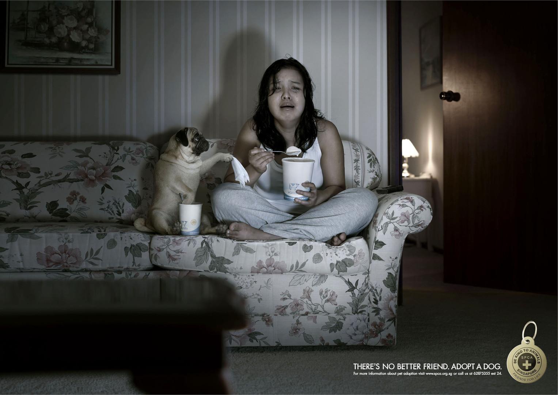 SPCA Couch.jpg