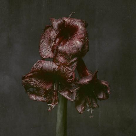 Flower-0172-purple1.2.jpg