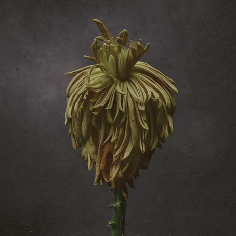 Flower-0237-yellow1.2.jpg