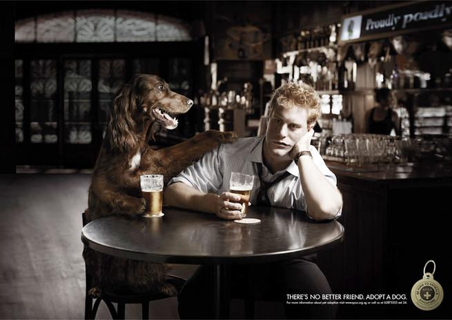 SPCA Bar.jpg