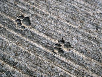 traces-2328659_1280.jpg