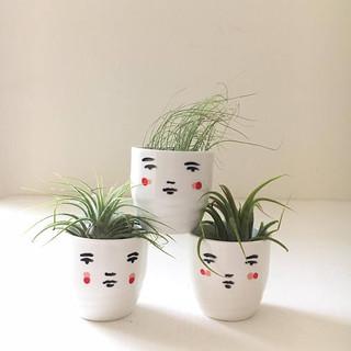 mini face pots and air plants for my little belleville