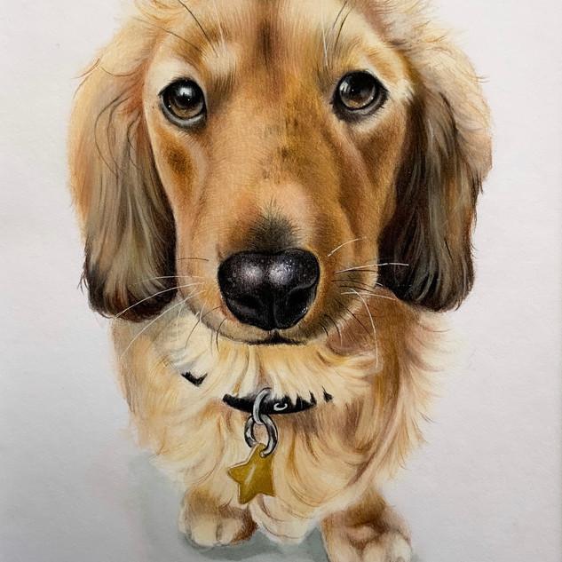 Puppy Eyes Overload!