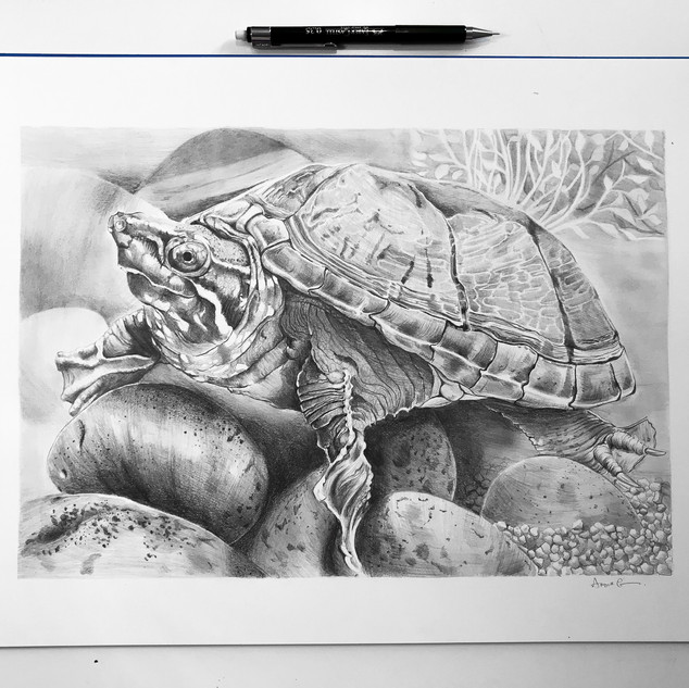 Turtle A3 size