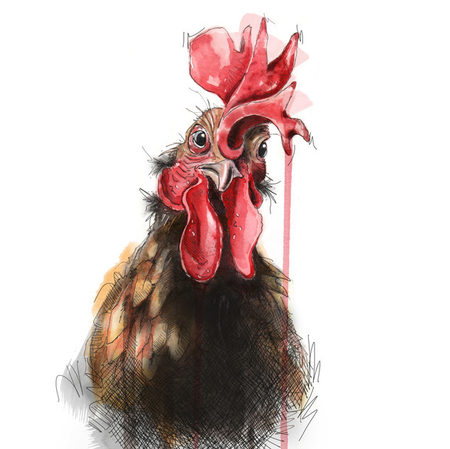 Rooster A4 size
