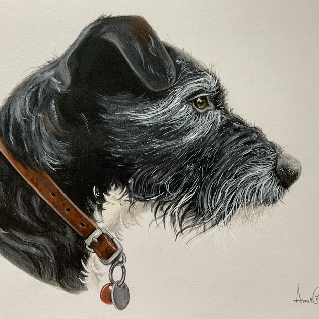 Whispy grey Terrier