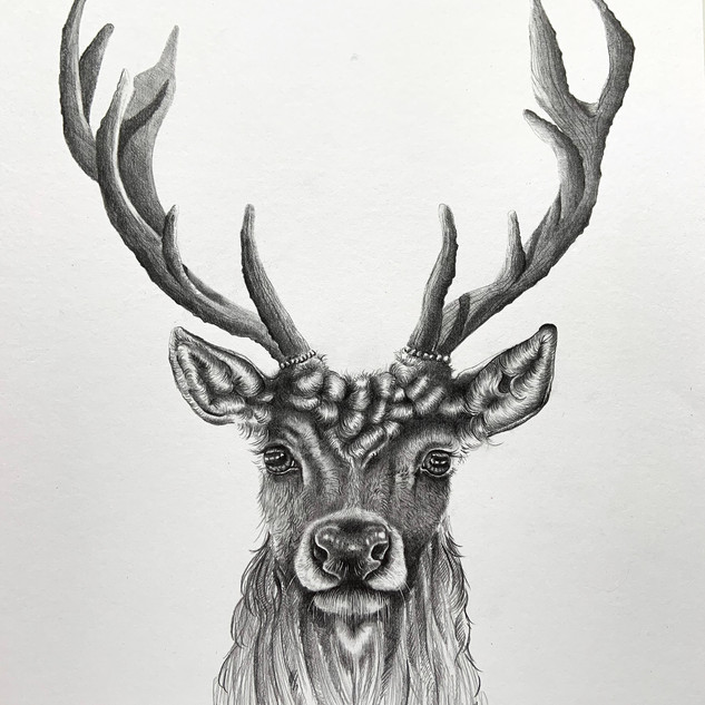 Stag Front On