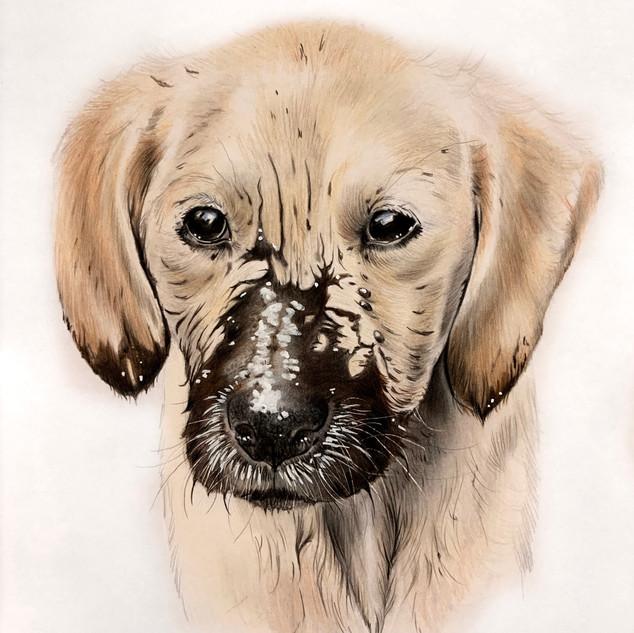 Muddy nose!
