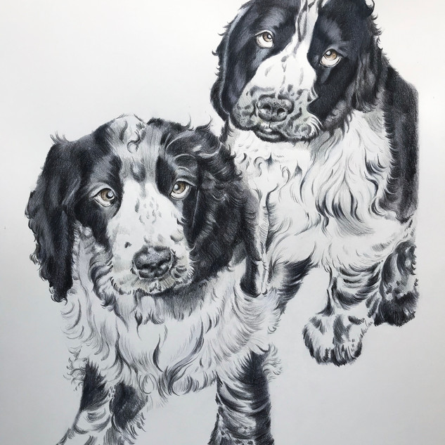Spaniels A3 size
