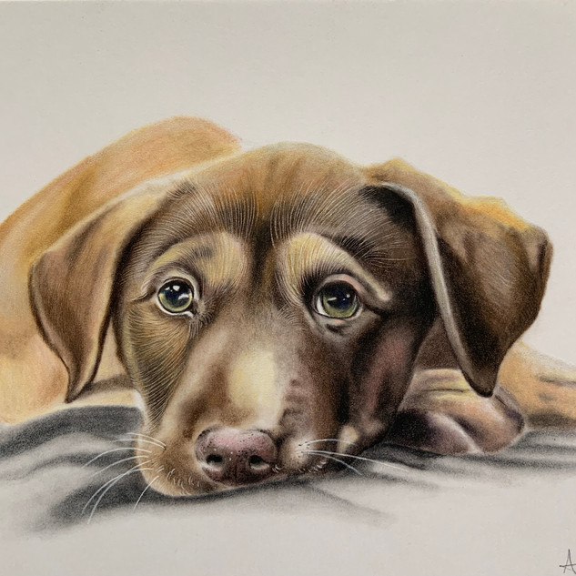 Puppy Eyes A4 size