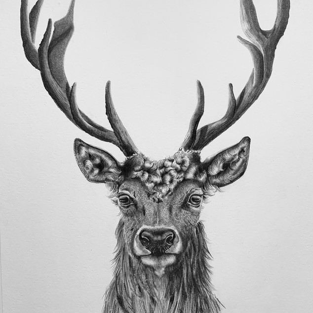 Bespoke stag drawing No.2