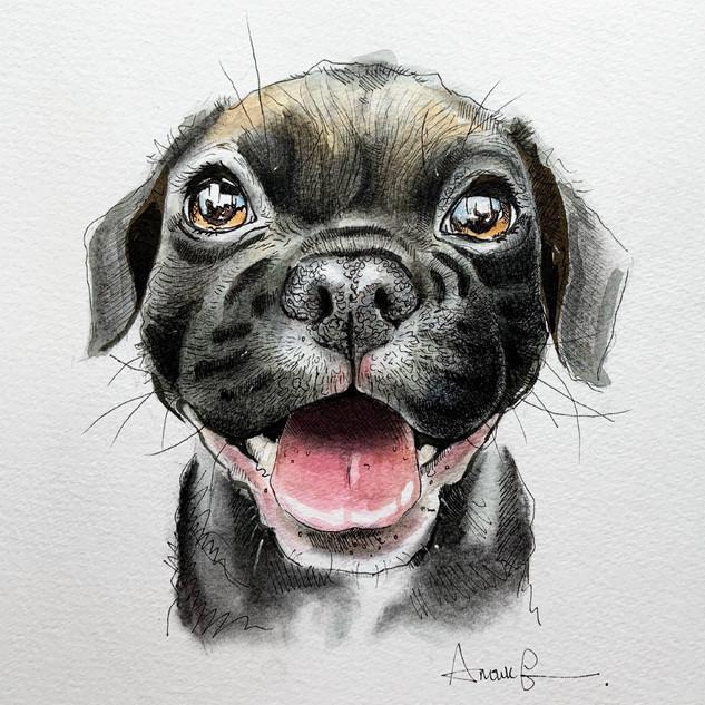 Pug A5 size