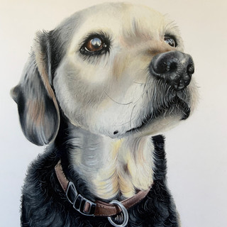 Proud Doggy A3 size