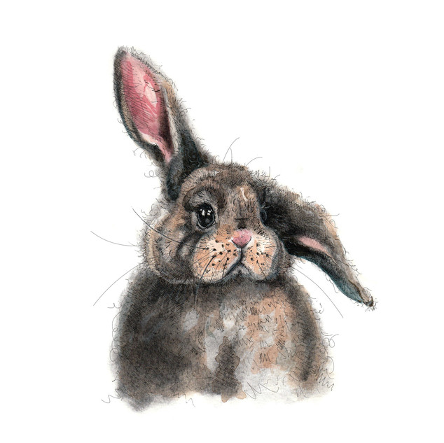 Bunny A5 size (For sale in prints!)