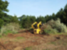 lot-clearing-tree-removal.jpg