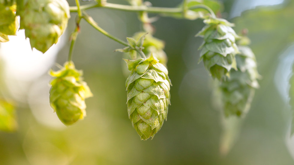 Hop(s) to it!