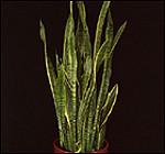 Medium Light Level Plants