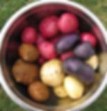 Heirloom varieties.jpg