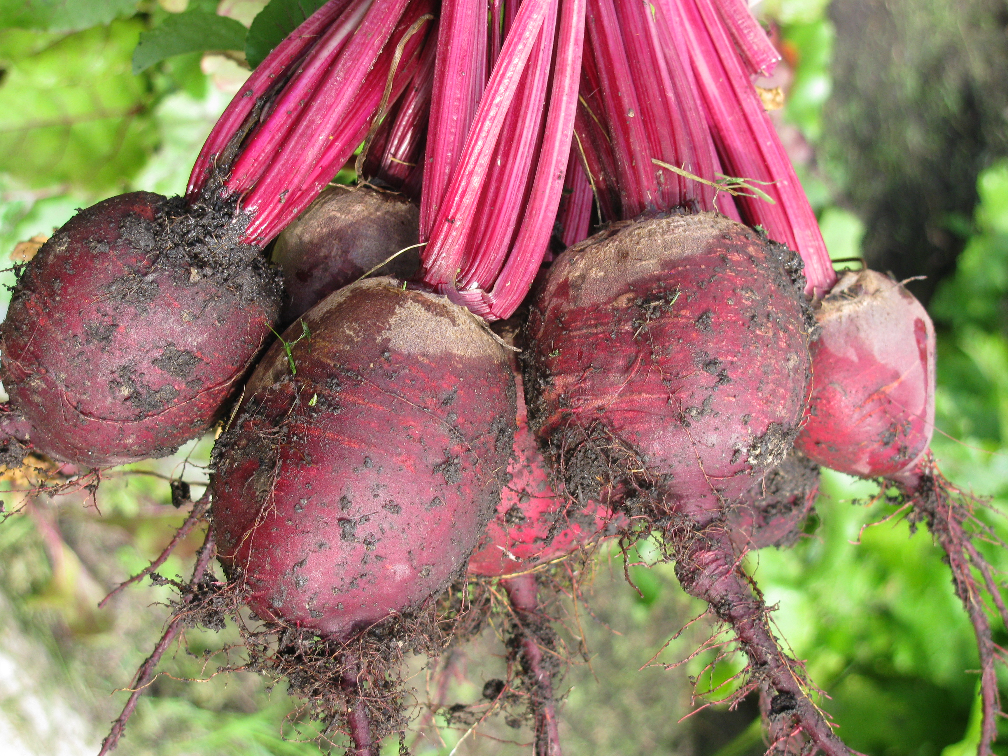 Beets abound!