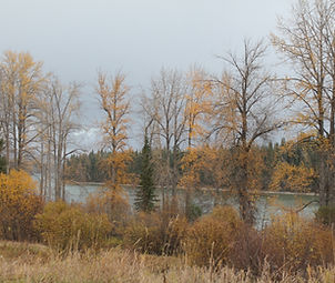 The Fraser River in fall, as seen from Huble Homestead