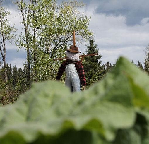 Scarecrow at Huble Homestead
